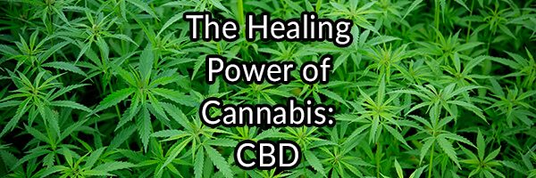 The Healing Power of Cannabis: CBD