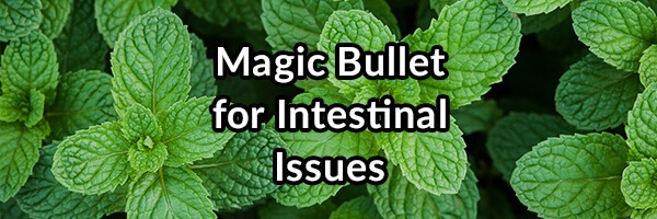 magic-bullet-for-intestinal-issues-enteric-coated-peppermint-oil
