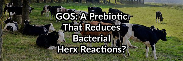 GOS: A Recommended Prebiotic to Improve Your Microbiome