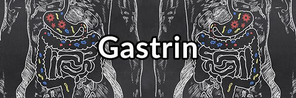 Gastrin - Important Hormone for Stomach Health and Preventing Reflux