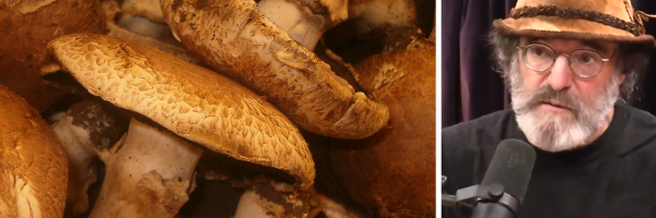 Are Raw Portabella Mushrooms Dangerous?